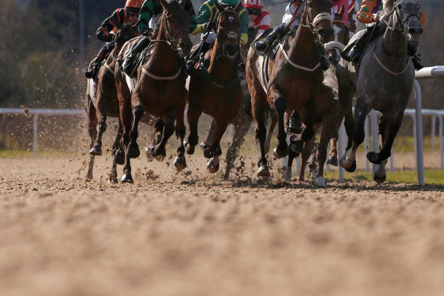 【競馬】チュウワウィザード、世界最高賞金レース・サウジCの招待受諾 画像