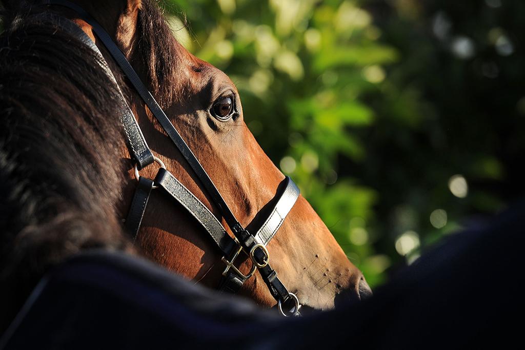 """【競馬】有馬記念で牝馬を買うより""""単勝10倍以上""""の牡馬3頭を買え 画像"""