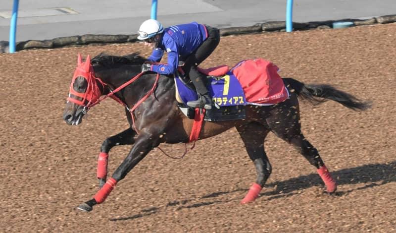 【皐月賞】グラティアス 好感触 M・デムーロは自信 歴代最多4勝「大好きなレース」 画像