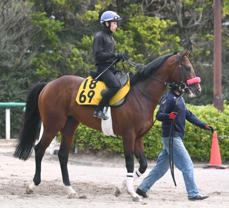 【エプソムC】ヤシャマル、急成長 馬体充実!尾形師「勝負強さある」 画像